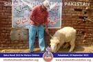 SFP Bakra Mandi Faisalabad 2015